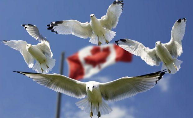 Express Entry Visa Canada